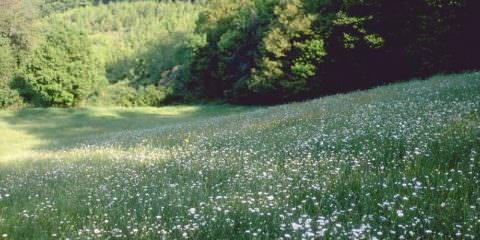 pa_na_campo_fiori
