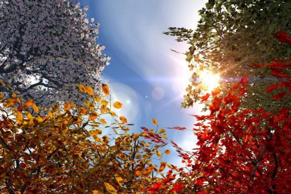 foto_autunno_303